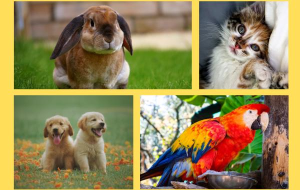 ZÁBAVNÝ TÝDEN PRO DĚTI Zvířata žijící s lidmi